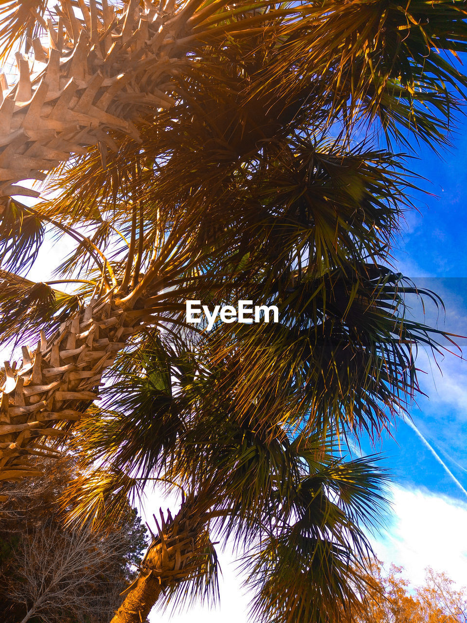 tree, low angle view, palm tree, growth, nature, no people, day, outdoors, beauty in nature, tree trunk, branch, sky, close-up