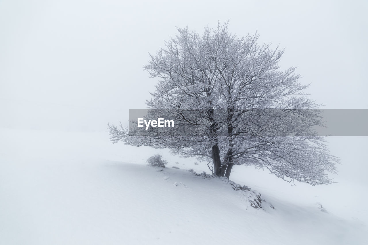 TREE ON SNOW COVERED LAND AGAINST SKY