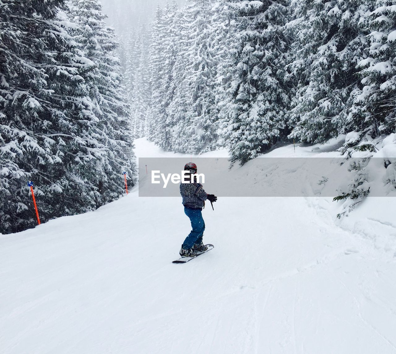 Rear View Of Person Snowboarding In Snow Covered Forest