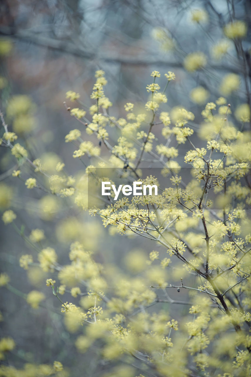 flower, nature, growth, beauty in nature, yellow, fragility, tranquility, day, plant, no people, field, freshness, springtime, outdoors, mustard plant, tree, close-up