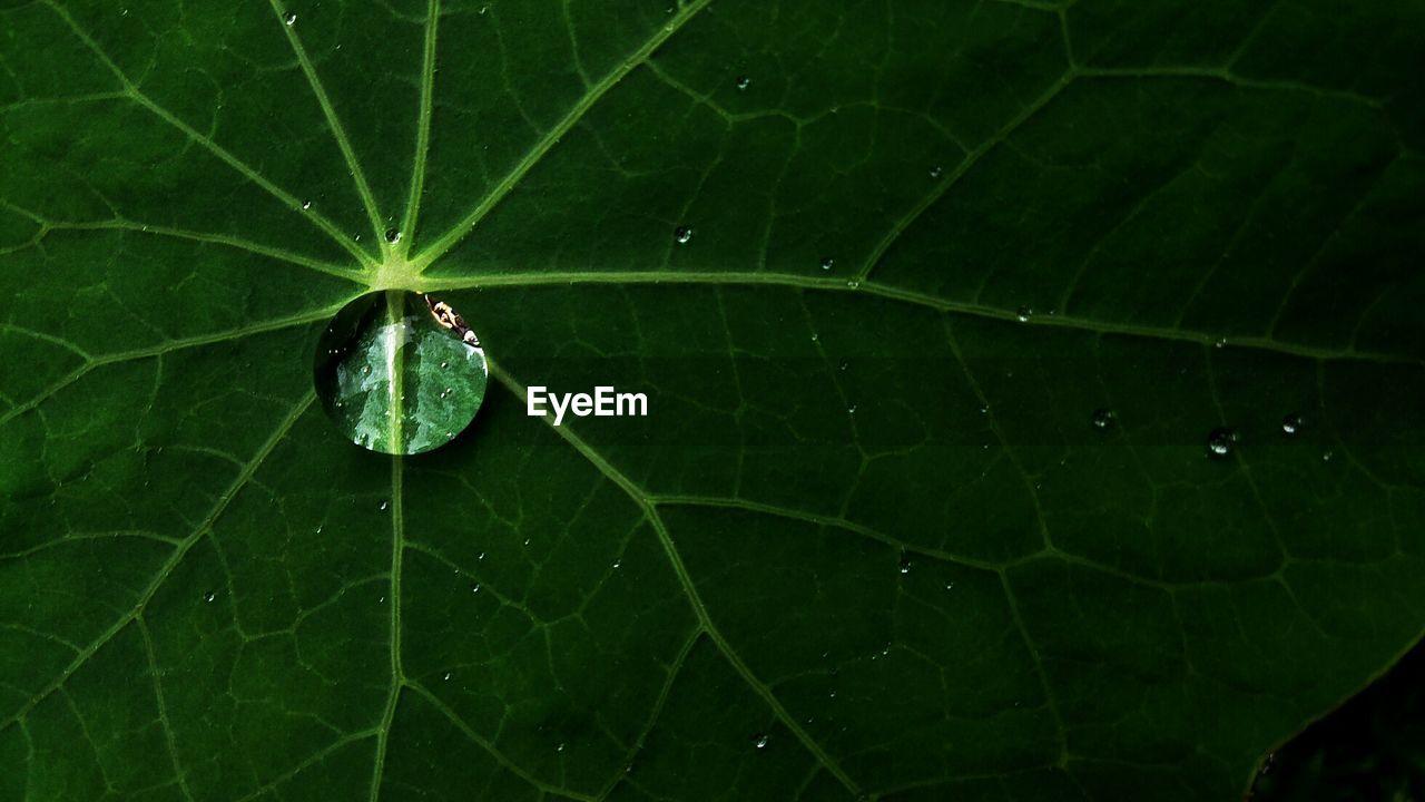 Macro shot of leaf on water droplets