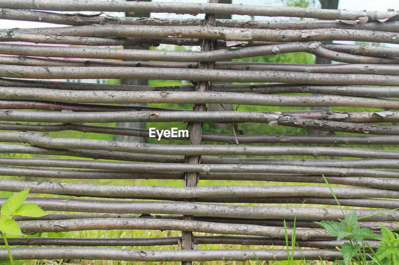 full frame, no people, day, large group of objects, backgrounds, abundance, bamboo - plant, close-up, outdoors, nature, tree