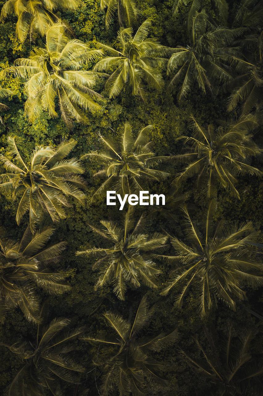 HIGH ANGLE VIEW OF FRESH GREEN PLANTS