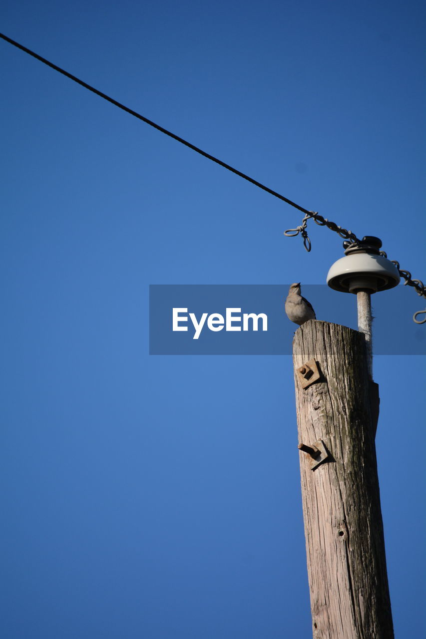 cable, blue, animals in the wild, copy space, low angle view, clear sky, animal themes, animal wildlife, day, outdoors, wooden post, perching, wood - material, no people, one animal, bird, nature, electricity pylon, telephone line, tree