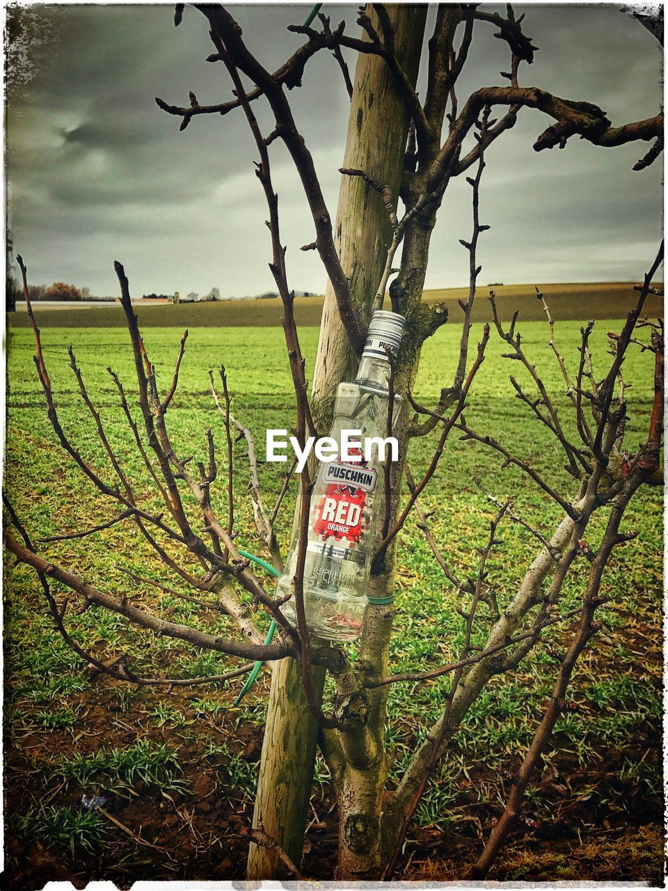 western script, text, tree, communication, safety, growth, branch, tree trunk, green color, warning, no people, hanging, outdoors, plant, day, nature, sky, beauty in nature, grass, close-up