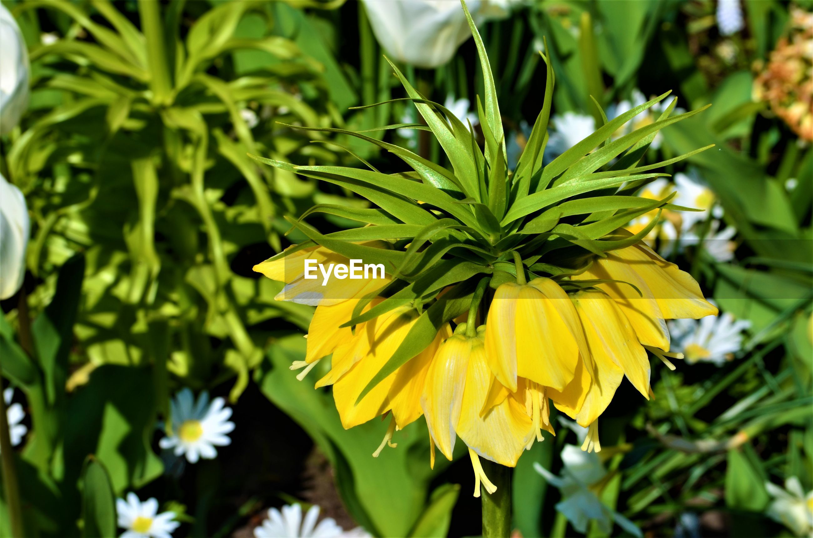 CLOSE UP OF YELLOW FLOWERING PLANT