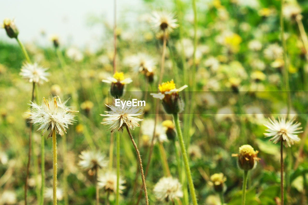 flowering plant, flower, plant, freshness, fragility, vulnerability, growth, beauty in nature, flower head, inflorescence, petal, close-up, nature, land, focus on foreground, field, day, no people, yellow, plant stem, outdoors, pollen, pollination