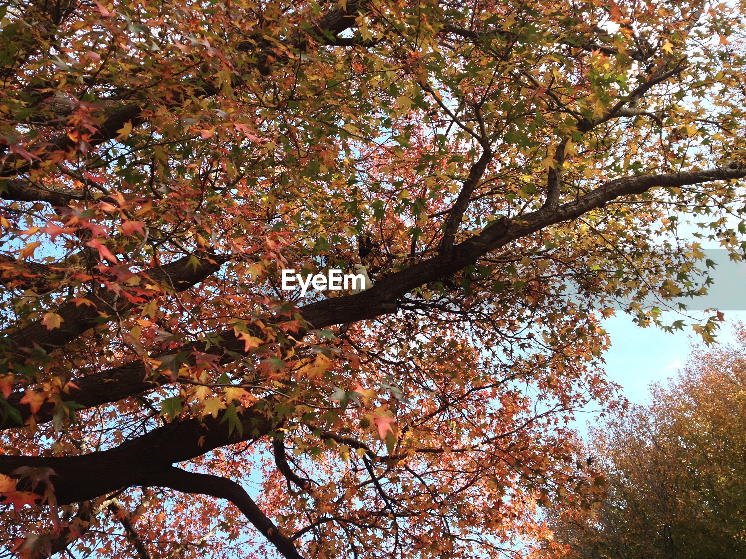tree, low angle view, autumn, branch, change, growth, nature, beauty in nature, tranquility, season, leaf, sky, scenics, day, outdoors, no people, yellow, orange color, backgrounds, sunlight
