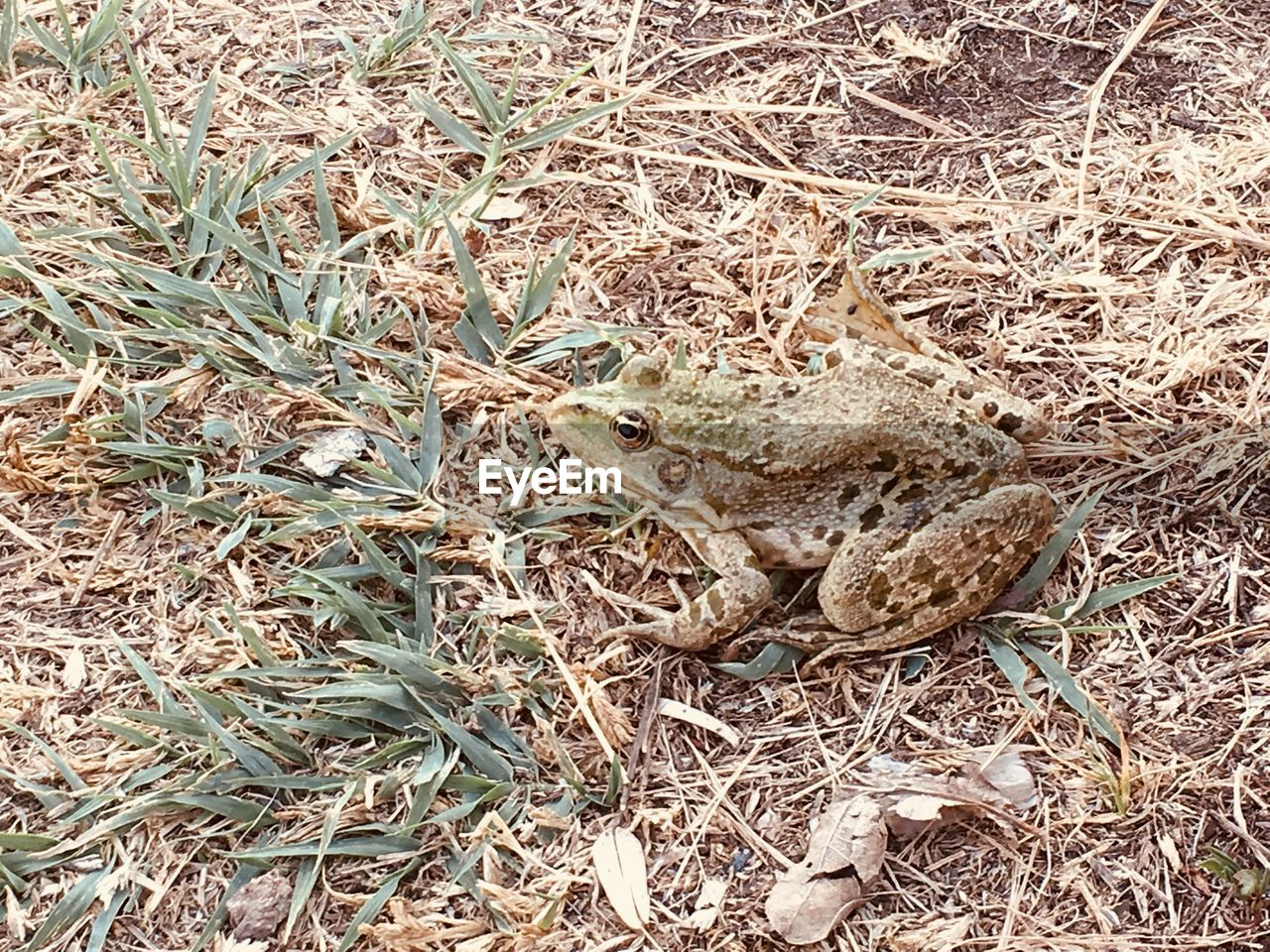 animal wildlife, animal themes, animals in the wild, animal, one animal, vertebrate, high angle view, nature, reptile, land, no people, plant, day, field, snake, lizard, frog, amphibian, grass, plant part, outdoors, poisonous, animal head