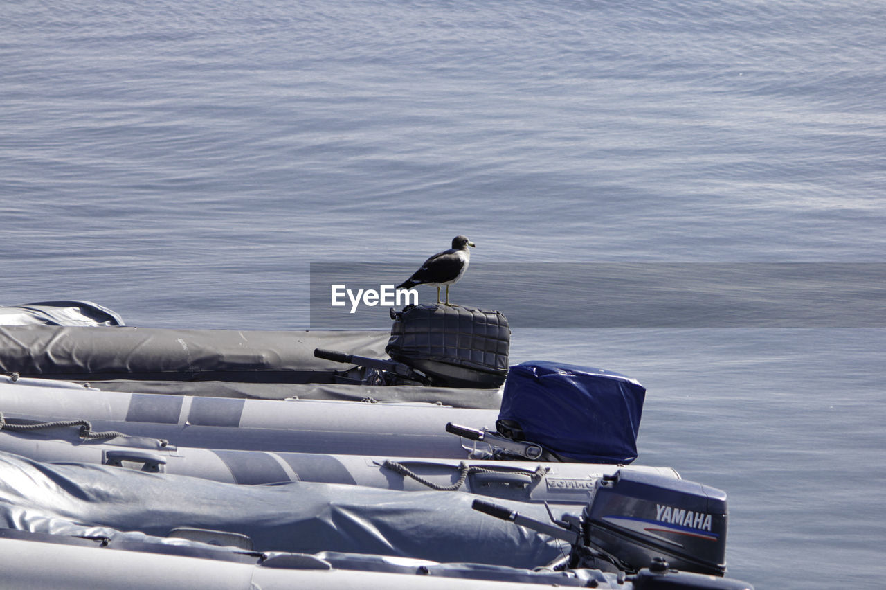 Bird perching on boat in lake