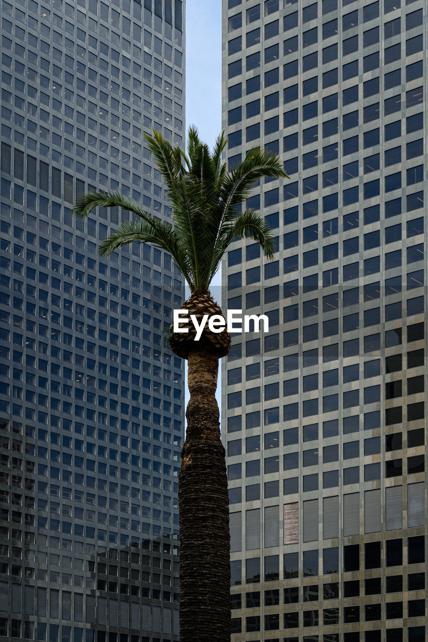 Low angle view of palm tree against modern buildings