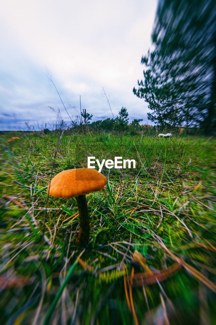 mushroom, nature, growth, beauty in nature, toadstool, fungus, sky, grass, tranquility, outdoors, no people, field, fly agaric, close-up, tree, day, freshness, scenics, fragility, fly agaric mushroom