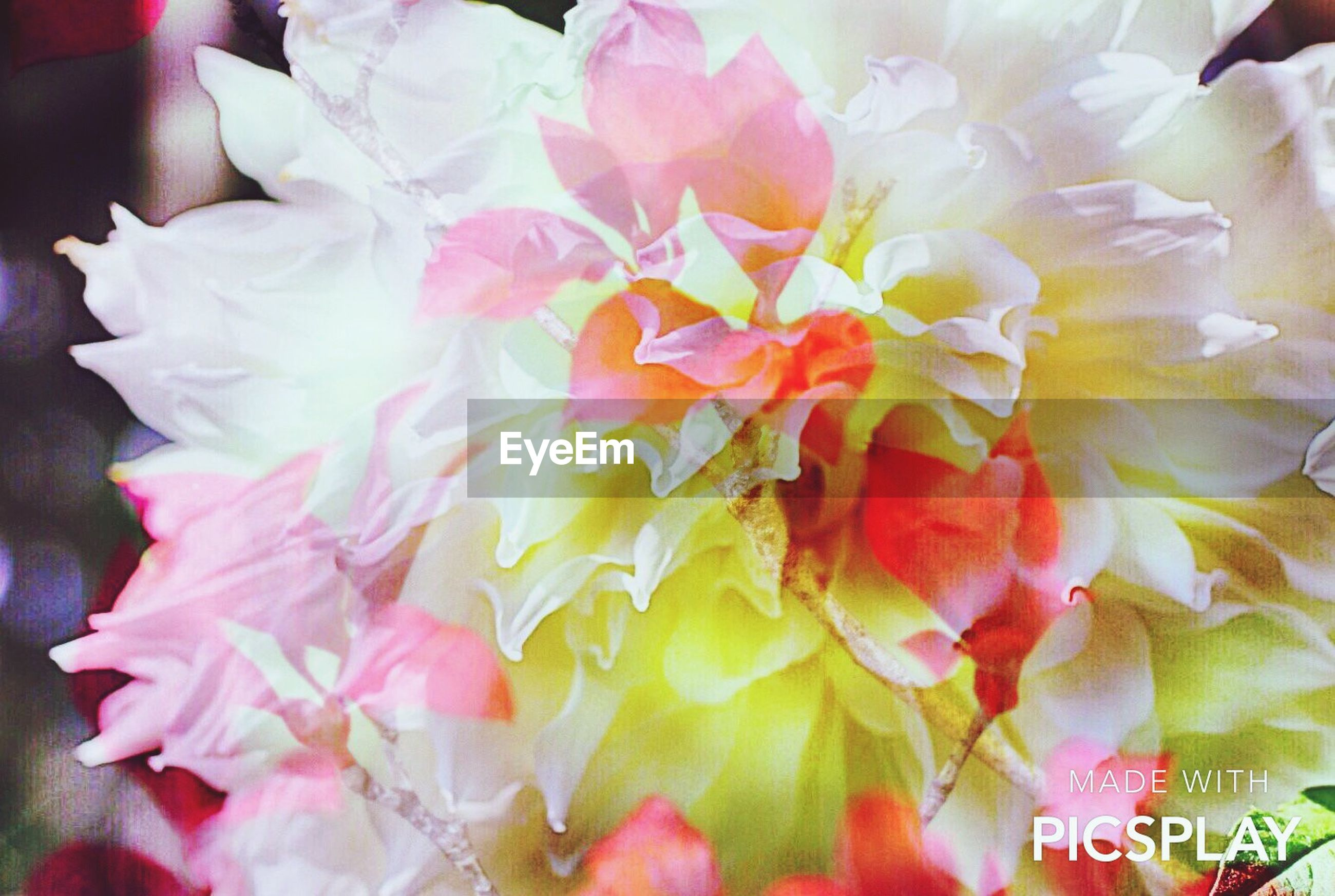 flower, petal, freshness, indoors, flower head, fragility, close-up, beauty in nature, full frame, pink color, rose - flower, high angle view, backgrounds, nature, no people, white color, bouquet, growth, blooming, decoration