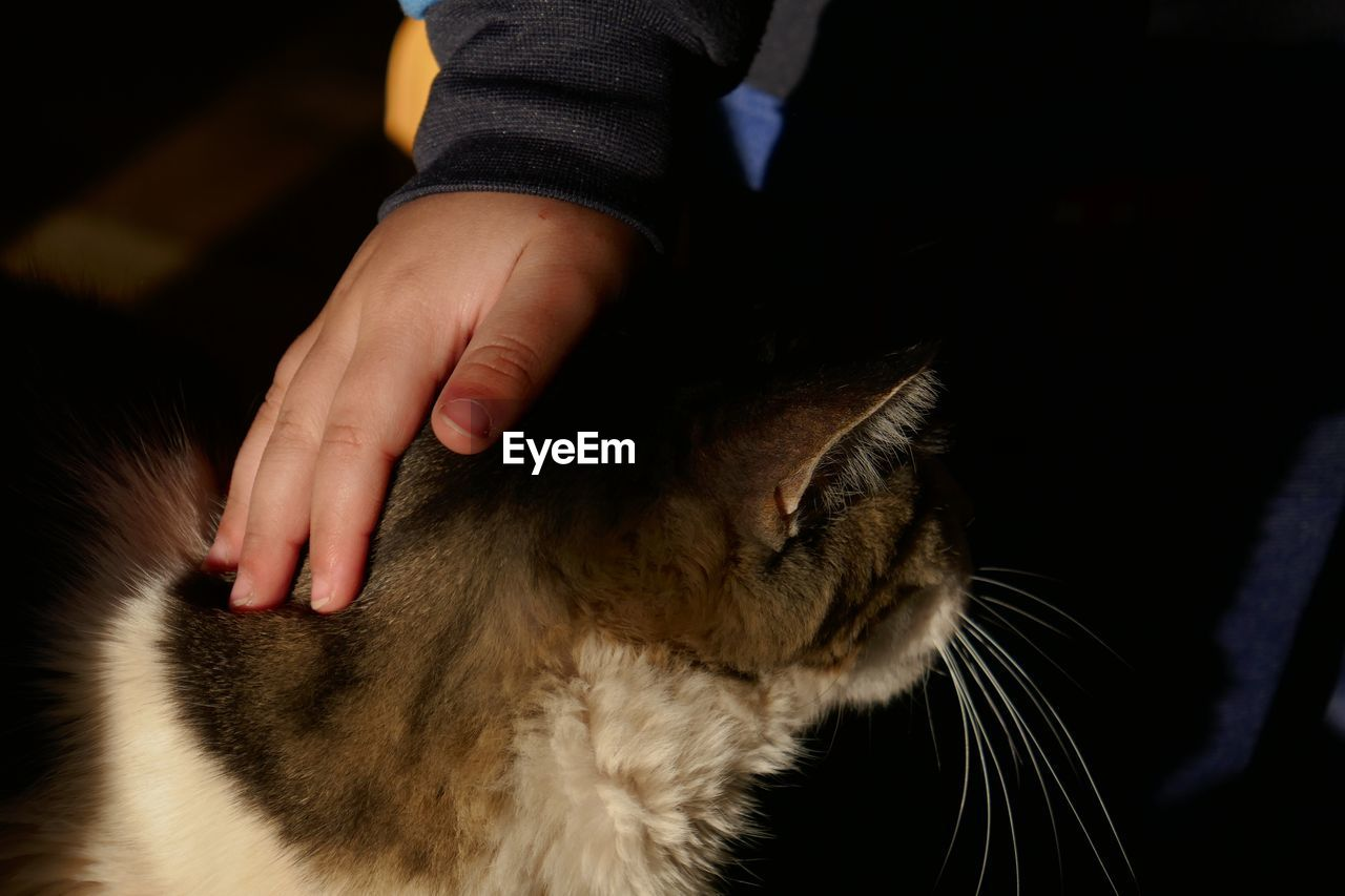 Cropped Hand Of Child Petting Cat At Home