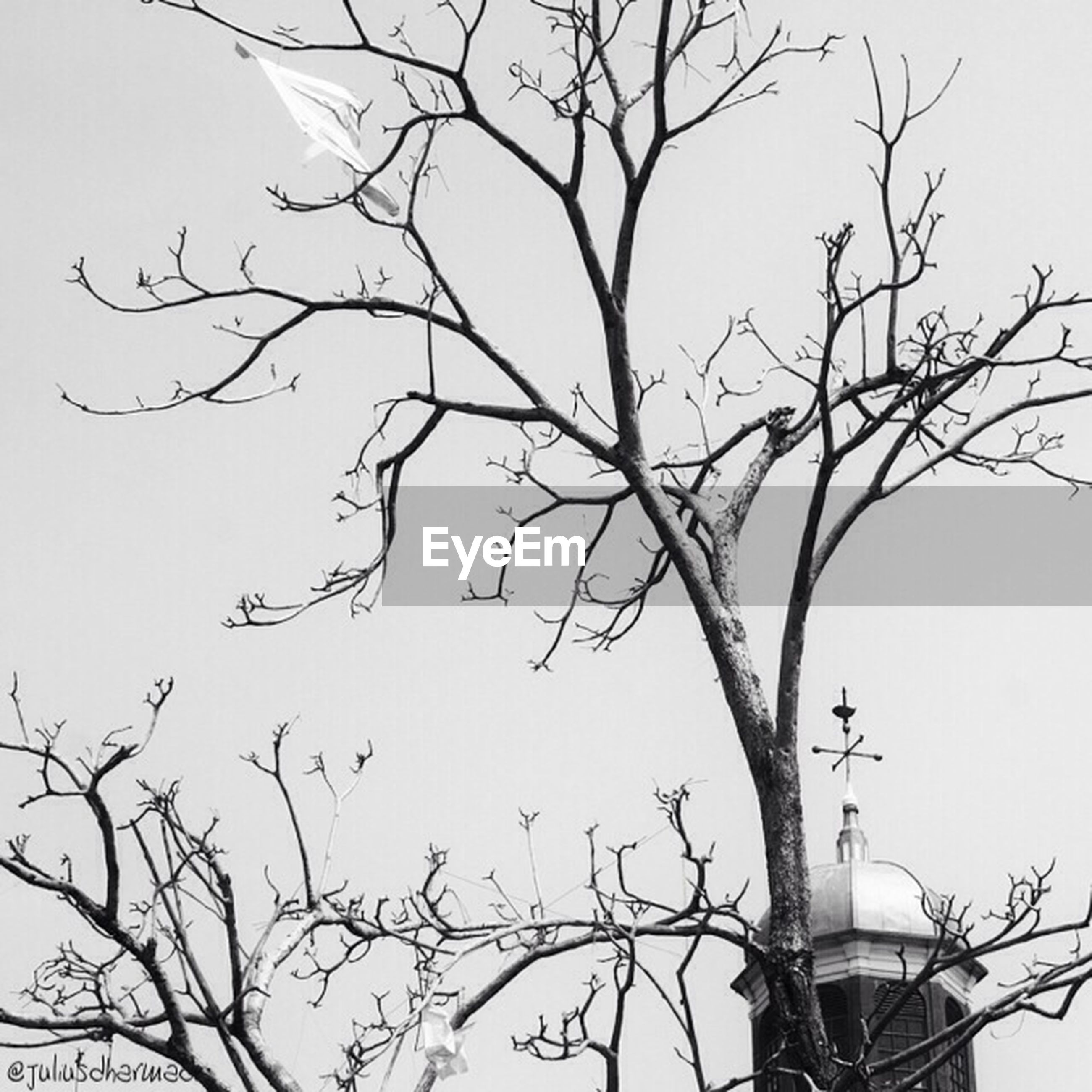low angle view, branch, bare tree, clear sky, tree, bird, sky, high section, nature, silhouette, perching, outdoors, copy space, no people, day, animals in the wild, twig, wildlife, animal themes, part of