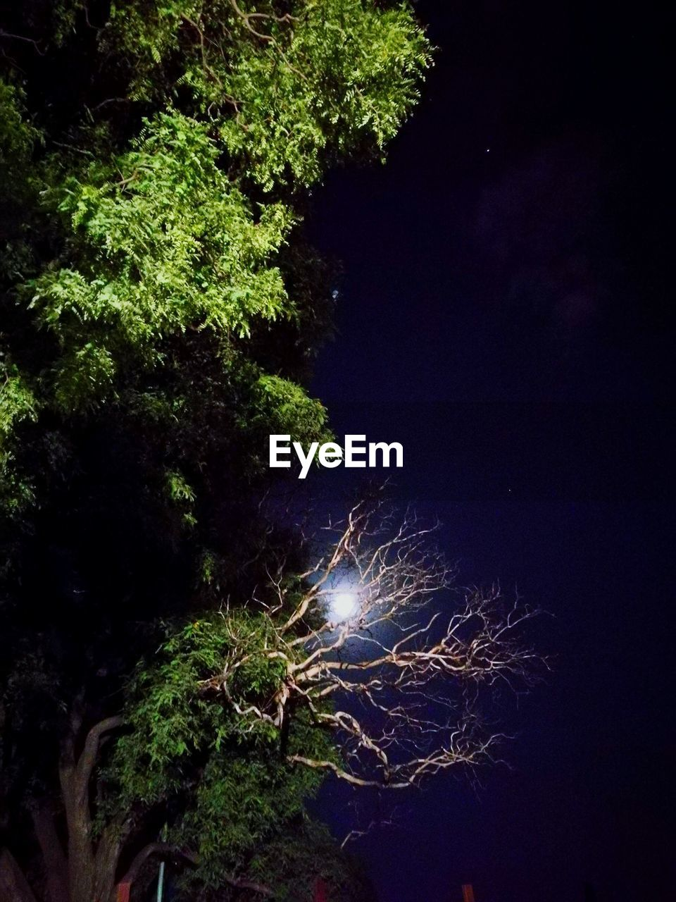 night, tree, nature, no people, beauty in nature, moon, growth, scenics, outdoors, astronomy, close-up, sky