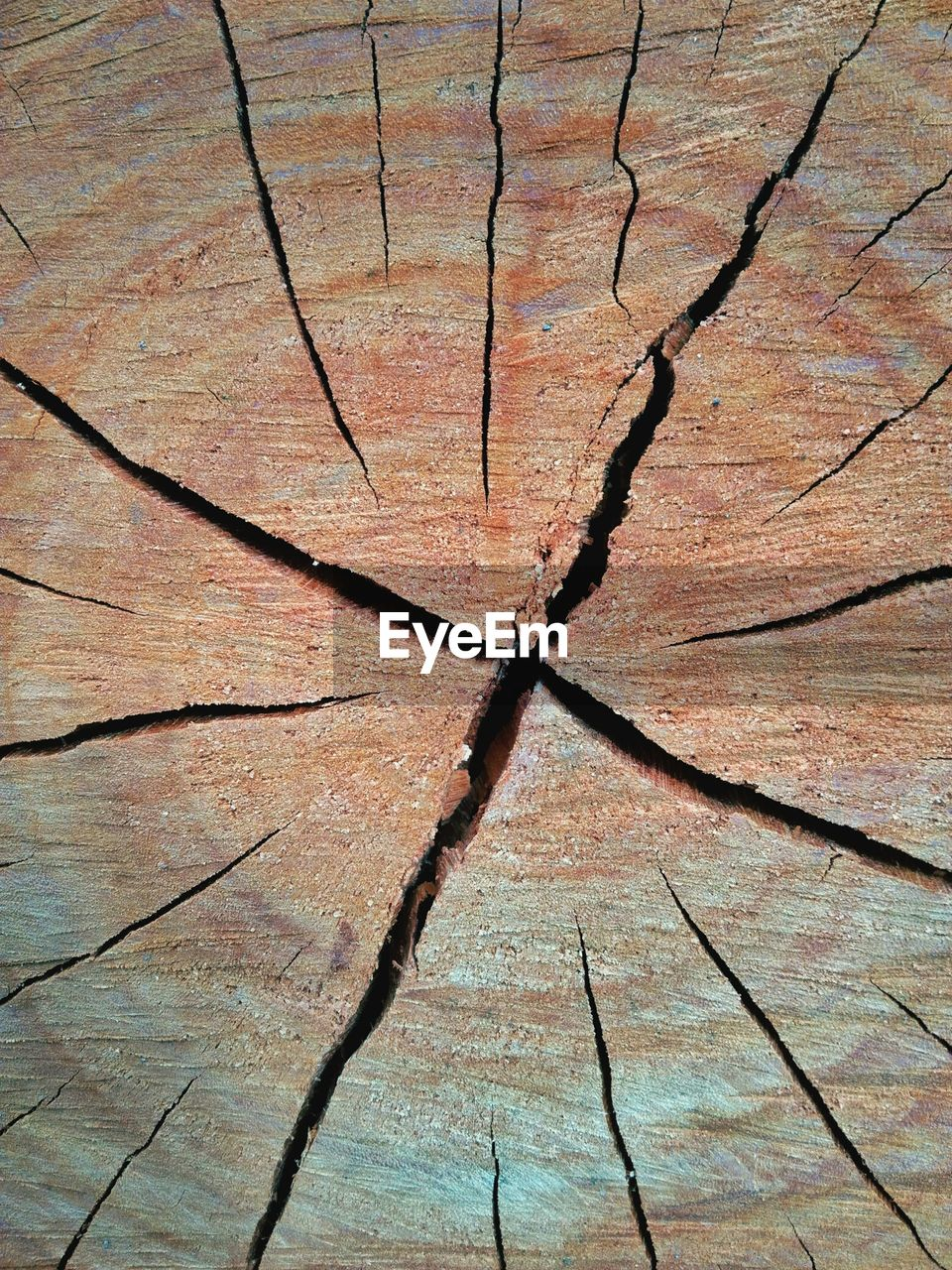 full frame, backgrounds, textured, no people, cracked, pattern, wood - material, day, close-up, bark, nature, outdoors, natural pattern, tree, brown, high angle view, tree stump, rough, old, directly above, tree ring, arid climate