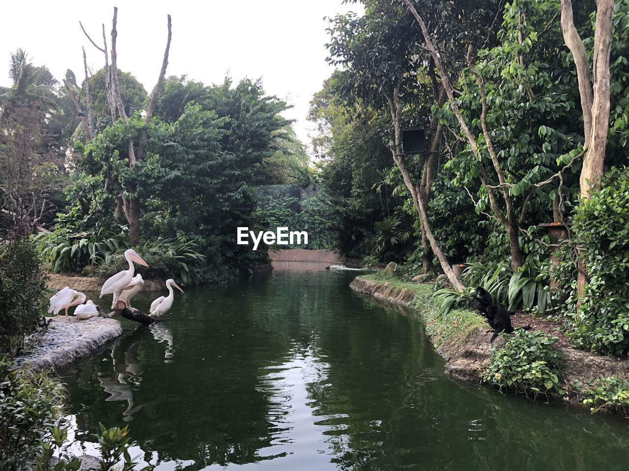water, tree, plant, nature, lake, group of animals, animal themes, animal, animals in the wild, beauty in nature, animal wildlife, bird, reflection, vertebrate, tranquility, day, no people, growth, waterfront, outdoors