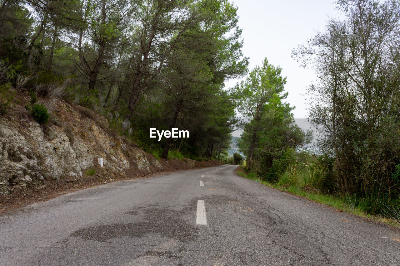 road, tree, plant, the way forward, direction, transportation, sign, nature, no people, day, marking, road marking, symbol, empty road, tranquility, growth, tranquil scene, asphalt, non-urban scene, diminishing perspective, outdoors, dividing line