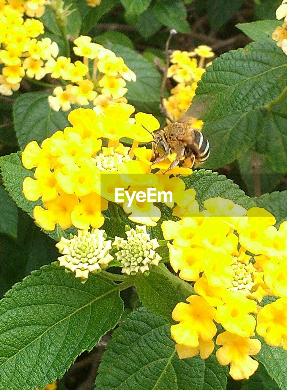 one animal, insect, flower, animal themes, animals in the wild, wildlife, fragility, nature, leaf, growth, plant, beauty in nature, yellow, animal wildlife, petal, bee, day, freshness, no people, outdoors, pollination, flower head, green color, close-up, blooming, full length, perching, buzzing