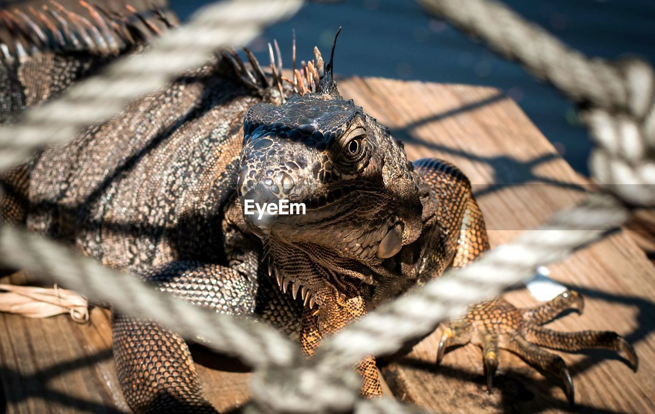 animal themes, animal, animal wildlife, one animal, reptile, selective focus, animals in the wild, no people, vertebrate, close-up, nature, day, sunlight, lizard, animal body part, outdoors, wood - material, shell, animal shell, animal head, iguana, animal scale