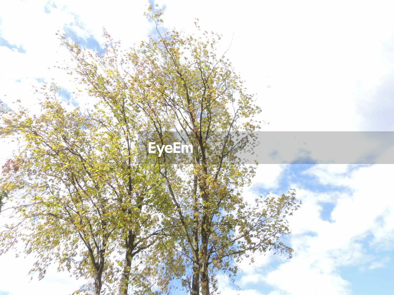 growth, tree, nature, flower, branch, low angle view, blossom, beauty in nature, sky, spring, freshness, no people, outdoors, day