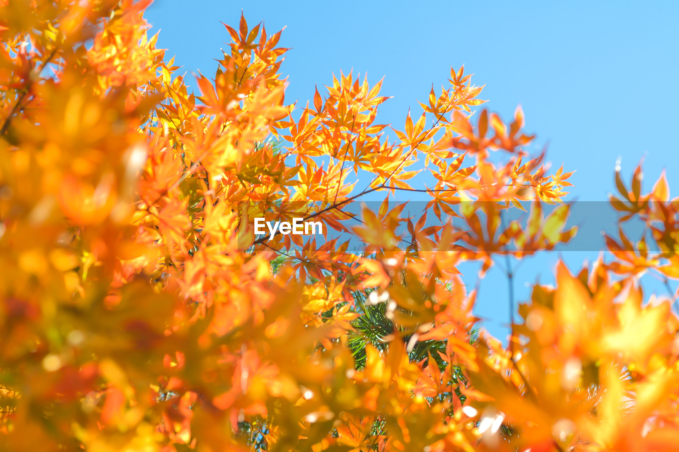 LOW ANGLE VIEW OF FLOWERING PLANTS AGAINST SKY DURING AUTUMN