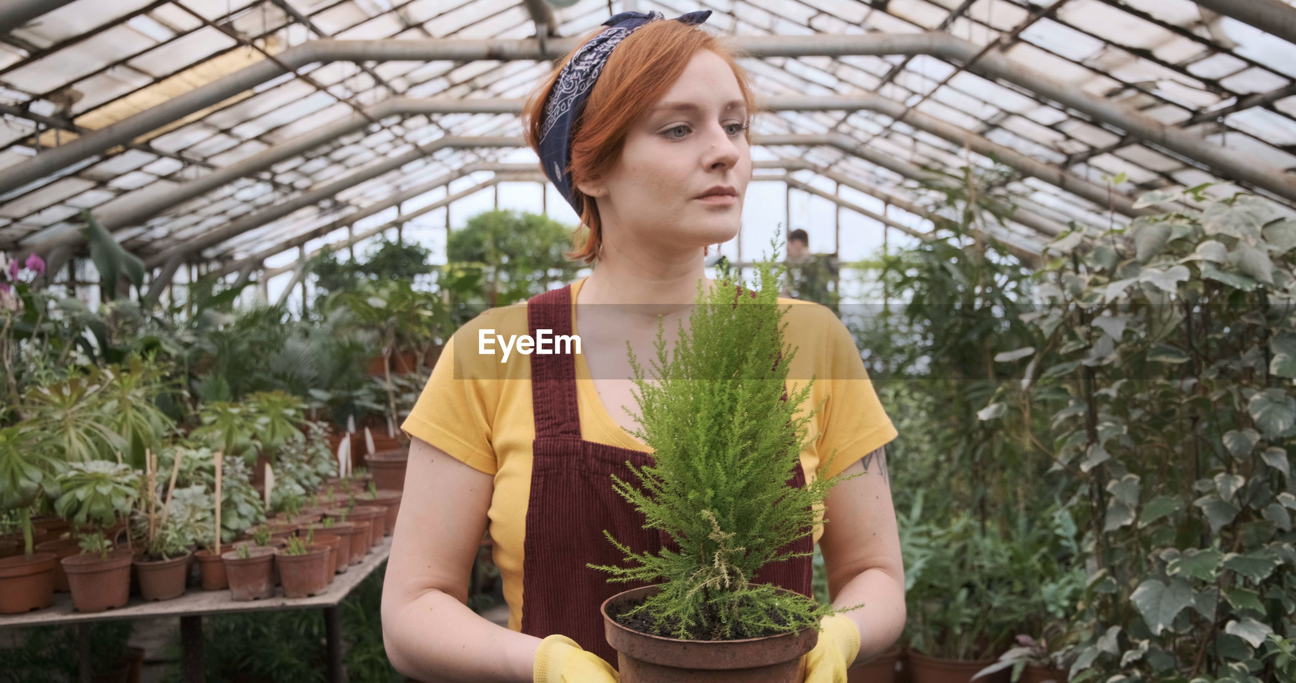 Beautiful woman holding plant while standing in greenhouse