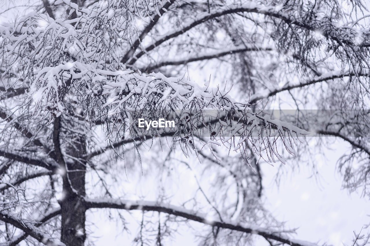 tree, plant, branch, cold temperature, winter, no people, snow, bare tree, low angle view, nature, frozen, beauty in nature, day, tranquility, selective focus, close-up, outdoors, growth, focus on foreground, ice