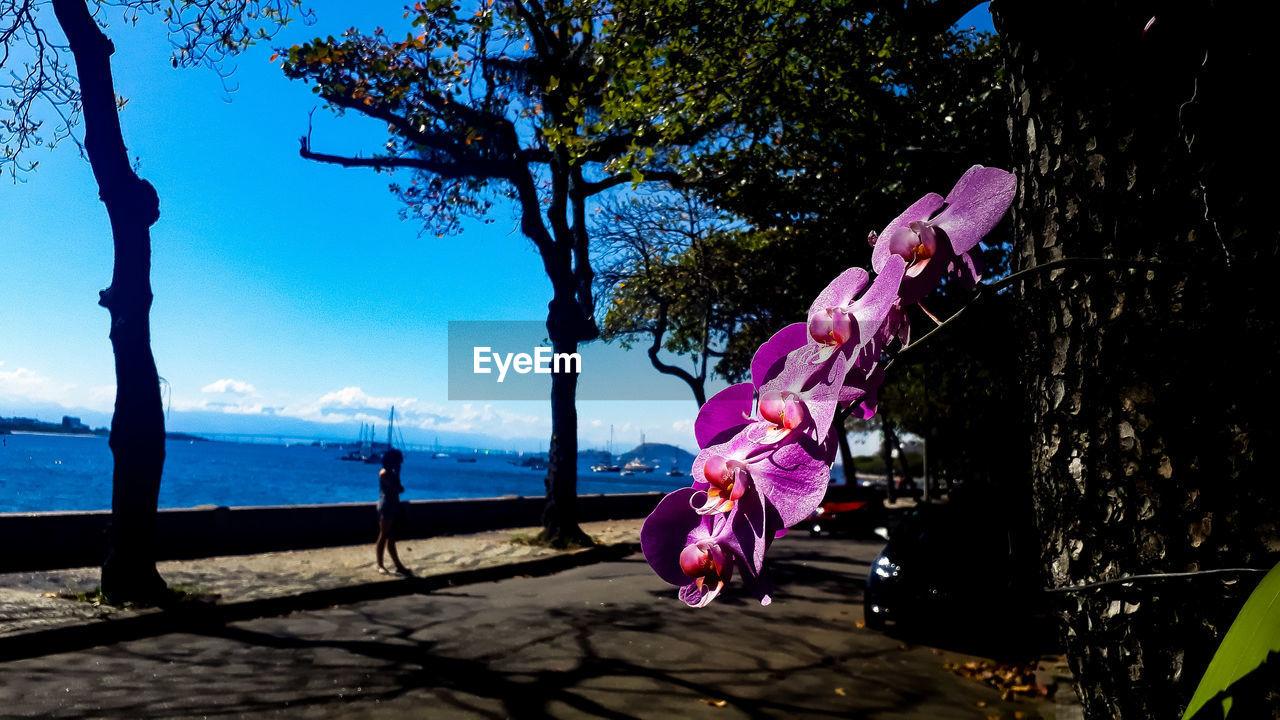 Purple flowers blooming against sea