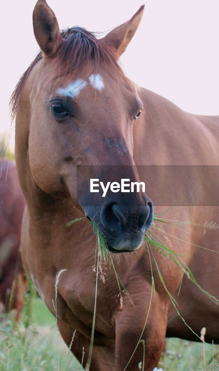 mammal, animal themes, animal, domestic animals, pets, livestock, domestic, one animal, horse, vertebrate, animal wildlife, brown, herbivorous, close-up, land, nature, day, animal body part, focus on foreground, portrait, no people, animal head, outdoors, animal nose, snout