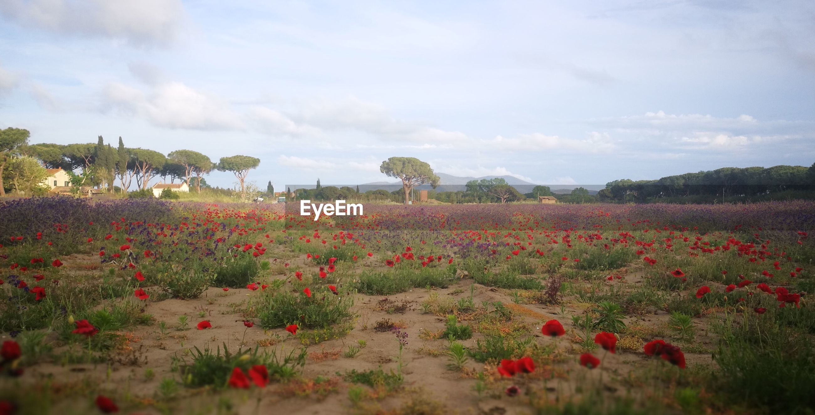 FLOWERS GROWING ON LAND AGAINST SKY