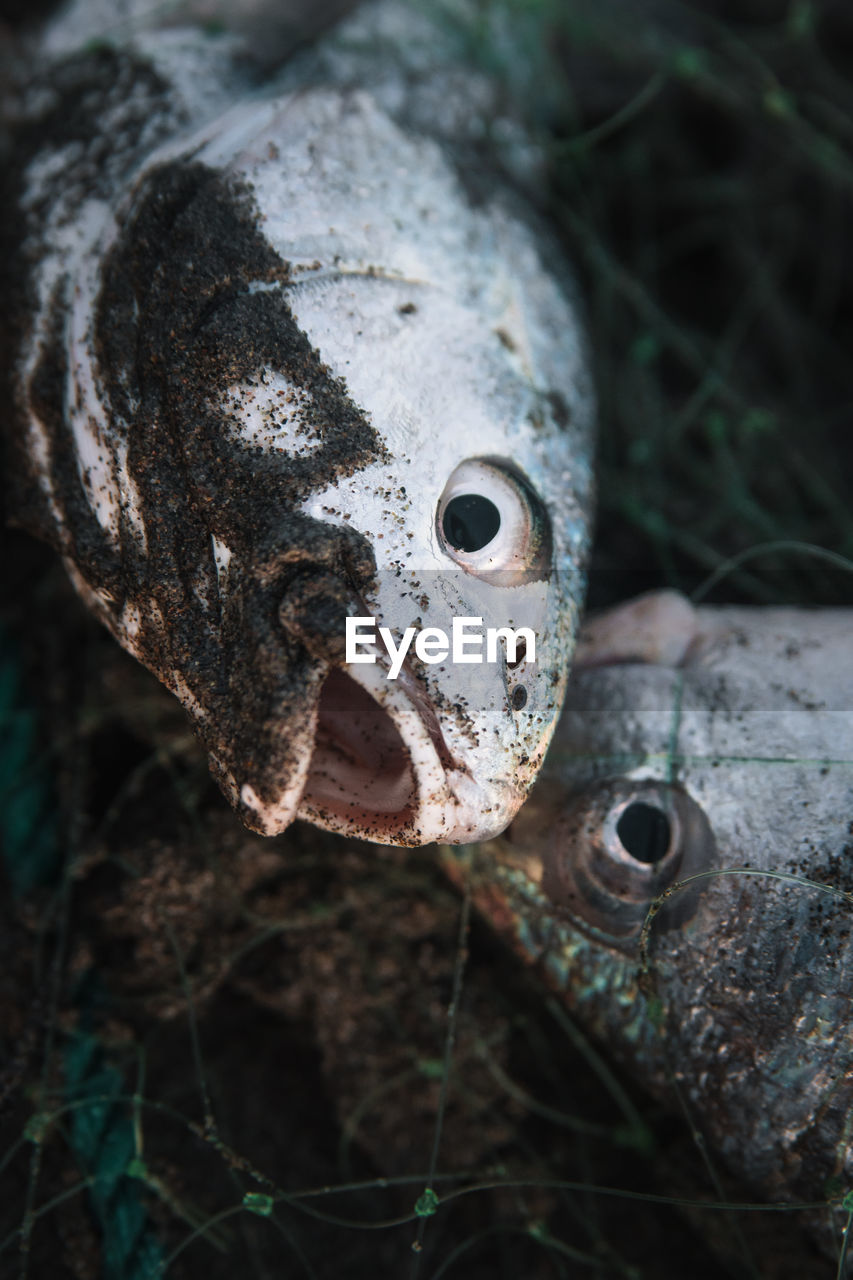 close-up, animal, vertebrate, animal themes, no people, nature, day, one animal, animals in the wild, animal wildlife, animal body part, plant, outdoors, focus on foreground, selective focus, fish, eye, tree, land, animal head, animal eye, animal mouth
