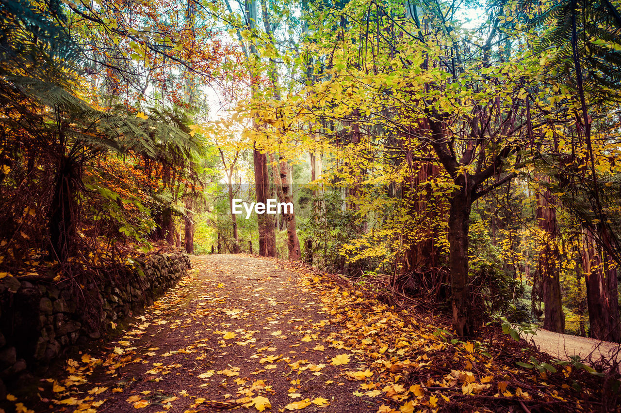 tree, autumn, change, plant, plant part, leaf, the way forward, direction, nature, forest, beauty in nature, footpath, land, growth, day, tranquility, falling, no people, tree trunk, trunk, outdoors, diminishing perspective, woodland, leaves, autumn collection, treelined, fall