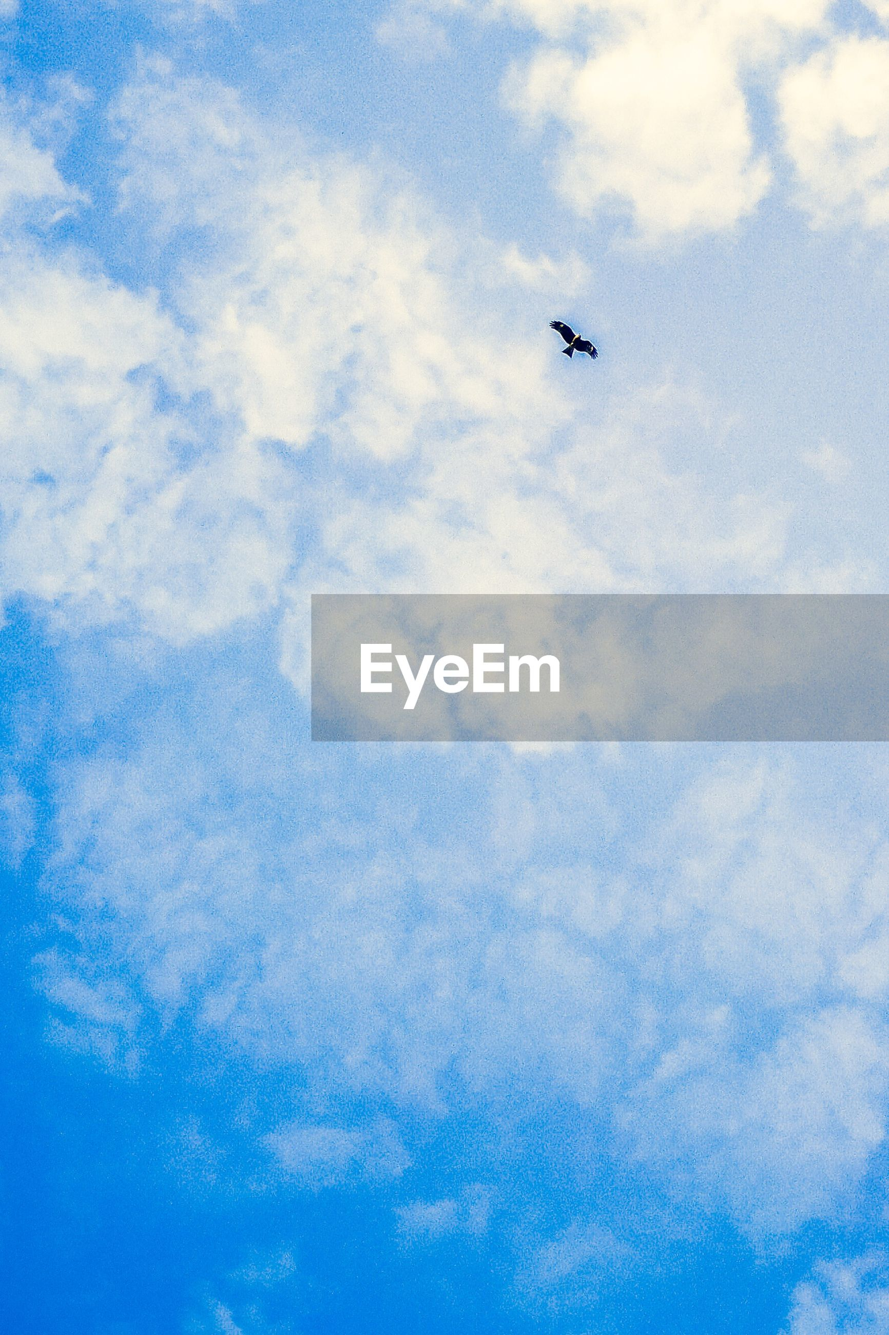 Low angle view of bird flying against cloudy sky