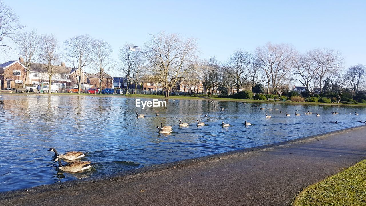 bird, animal themes, water, animals in the wild, river, duck, day, animal wildlife, outdoors, tree, no people, nature, bare tree, large group of animals, goose, swimming, building exterior, architecture, swan, sky, mammal
