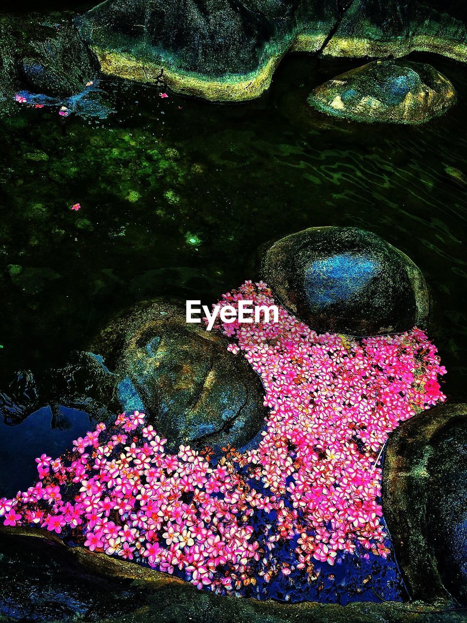 Flowers and stones in water