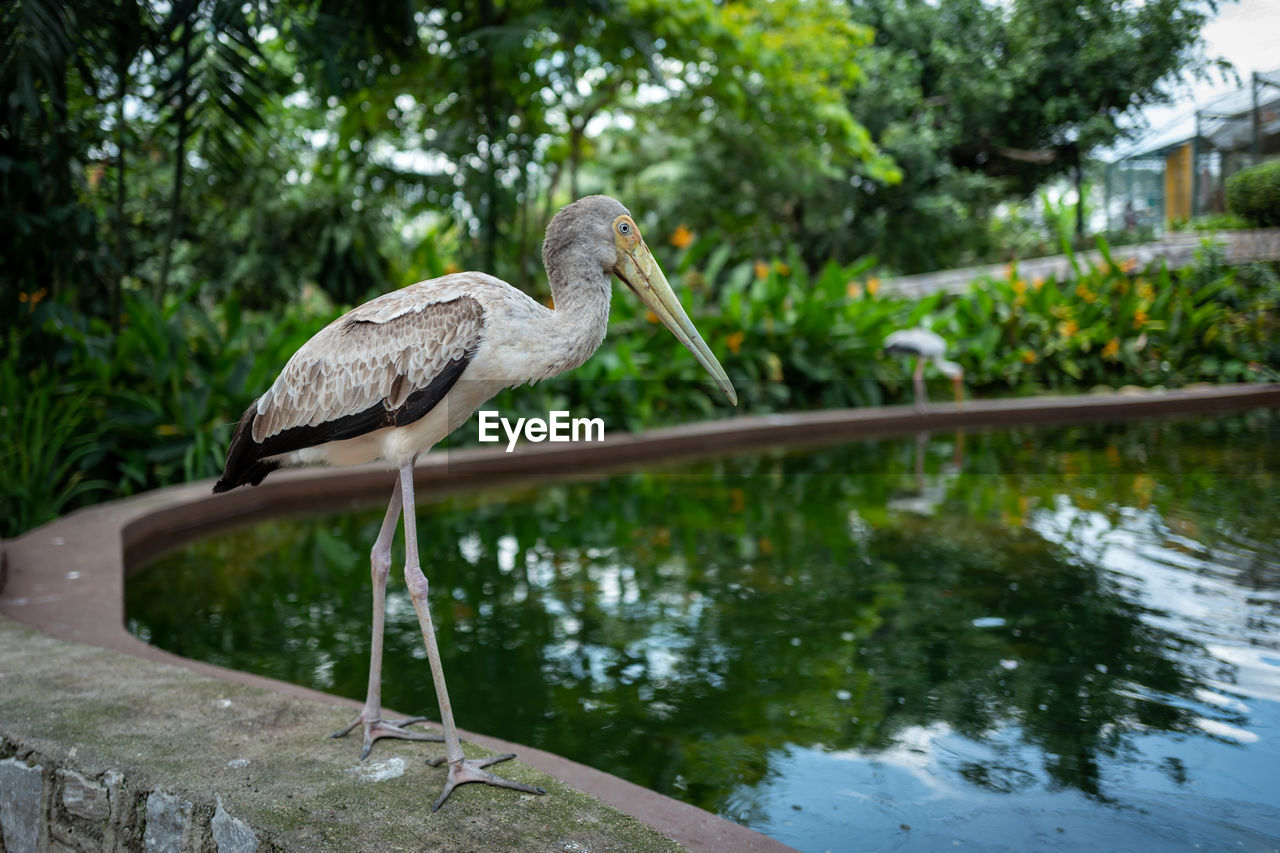 water, animal themes, bird, animals in the wild, vertebrate, animal wildlife, animal, one animal, nature, focus on foreground, day, plant, lake, no people, reflection, tree, perching, outdoors, beak, stork