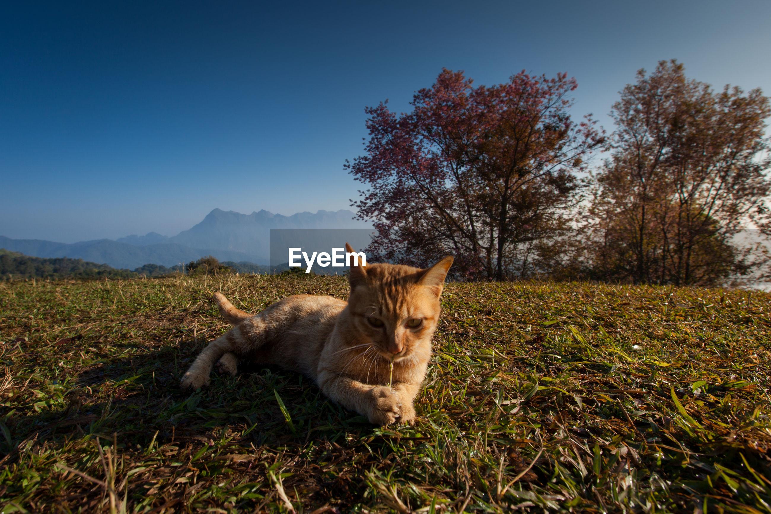 Portrait of ginger cat sitting on grass