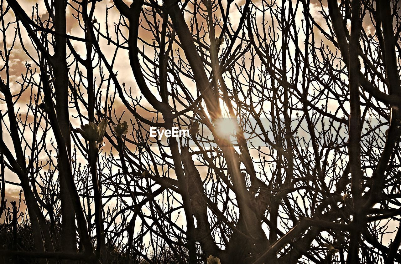 lens flare, sun, branch, tree, sunlight, bare tree, nature, outdoors, no people, day, low angle view, silhouette, beauty in nature, animal themes, sky