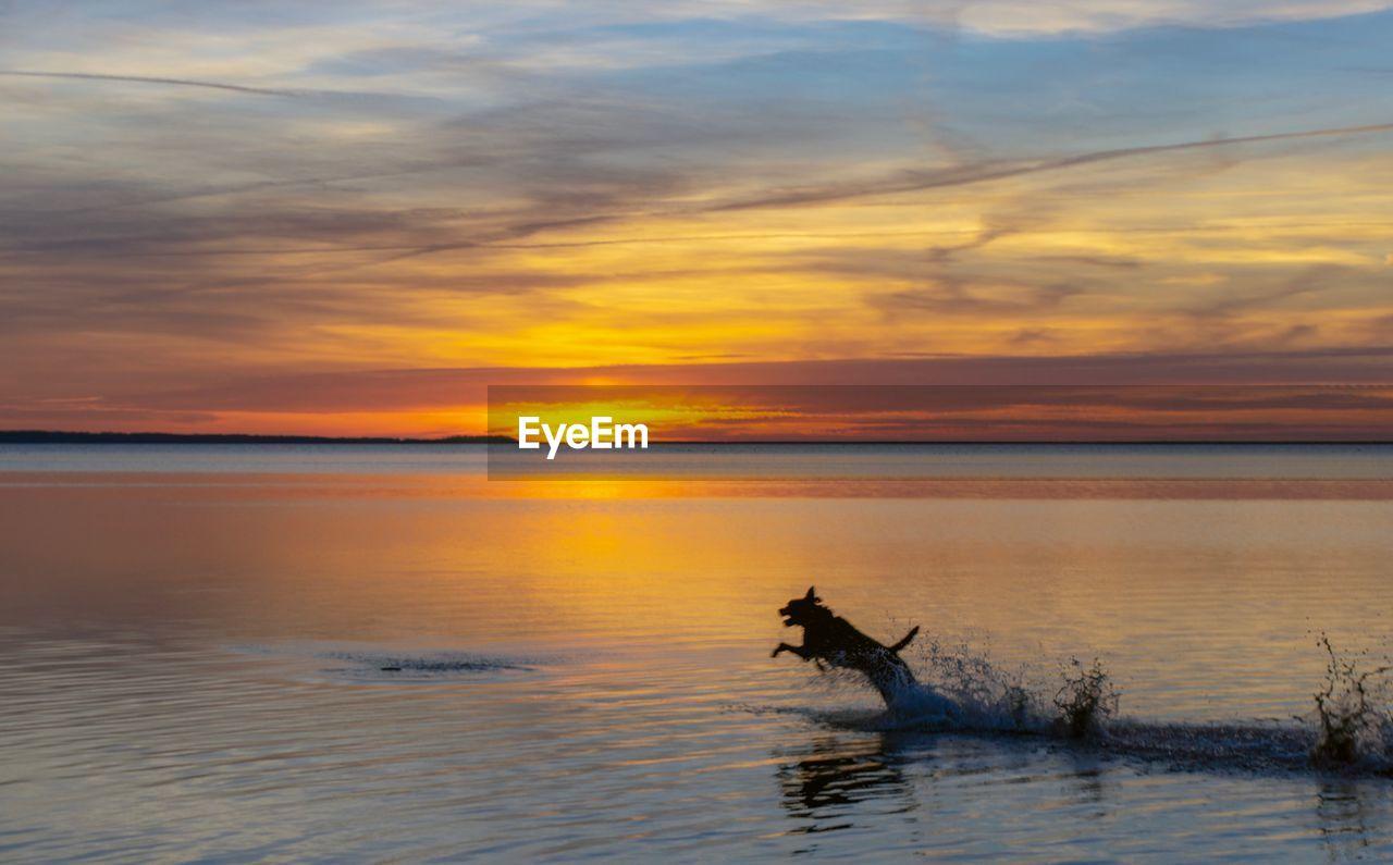 SILHOUETTE HORSE IN SEA AGAINST ORANGE SKY