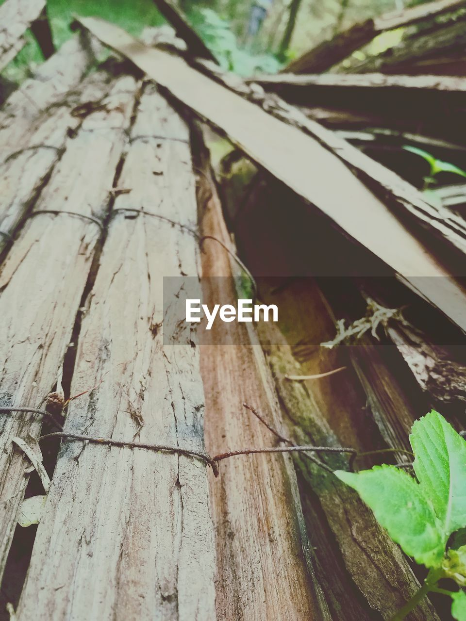 wood - material, no people, day, close-up, insect, outdoors, nature, tree, animal themes