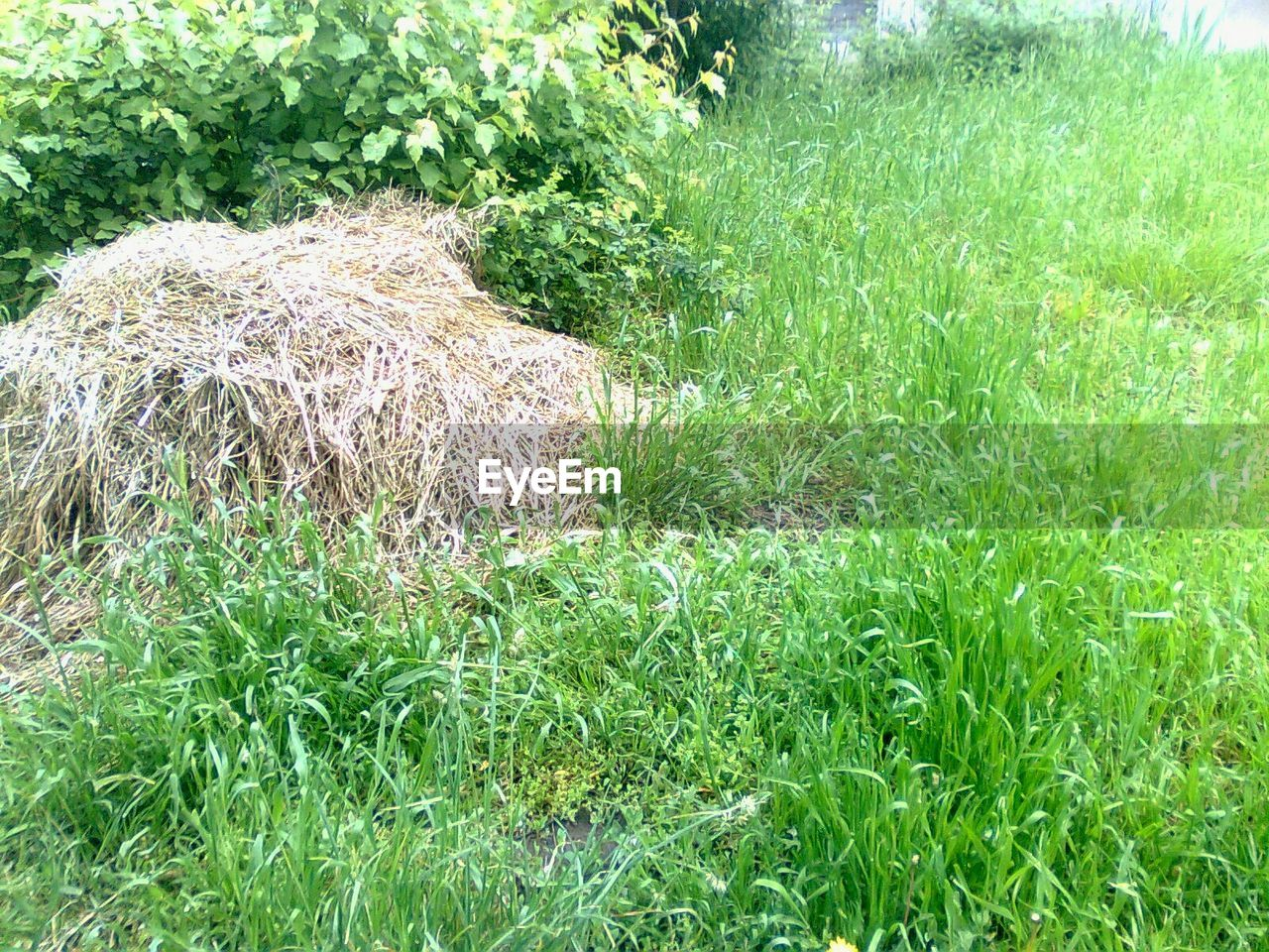 grass, field, growth, nature, green color, no people, outdoors, agriculture, day, plant, tranquility, beauty in nature, landscape, rural scene, hay bale