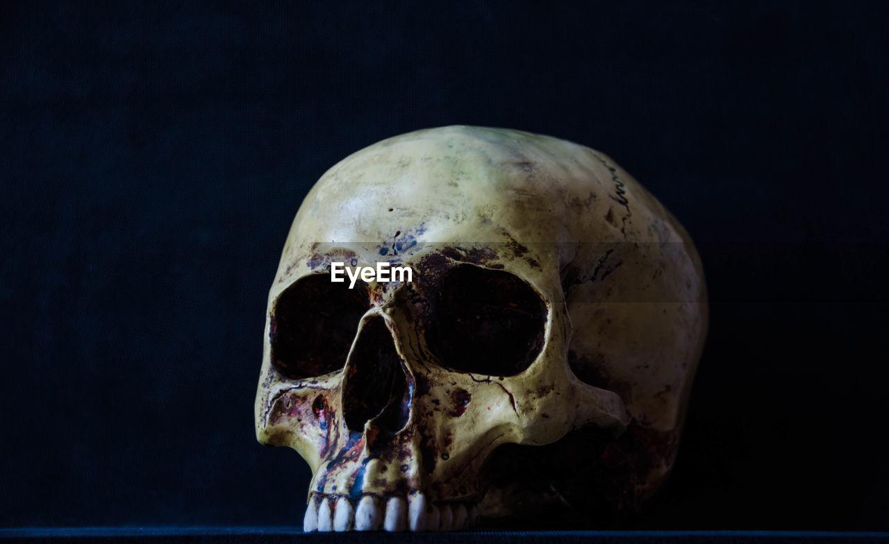 bone, animal skull, close-up, human skull, animal bone, black background, indoors, skeleton, studio shot, night, animal themes