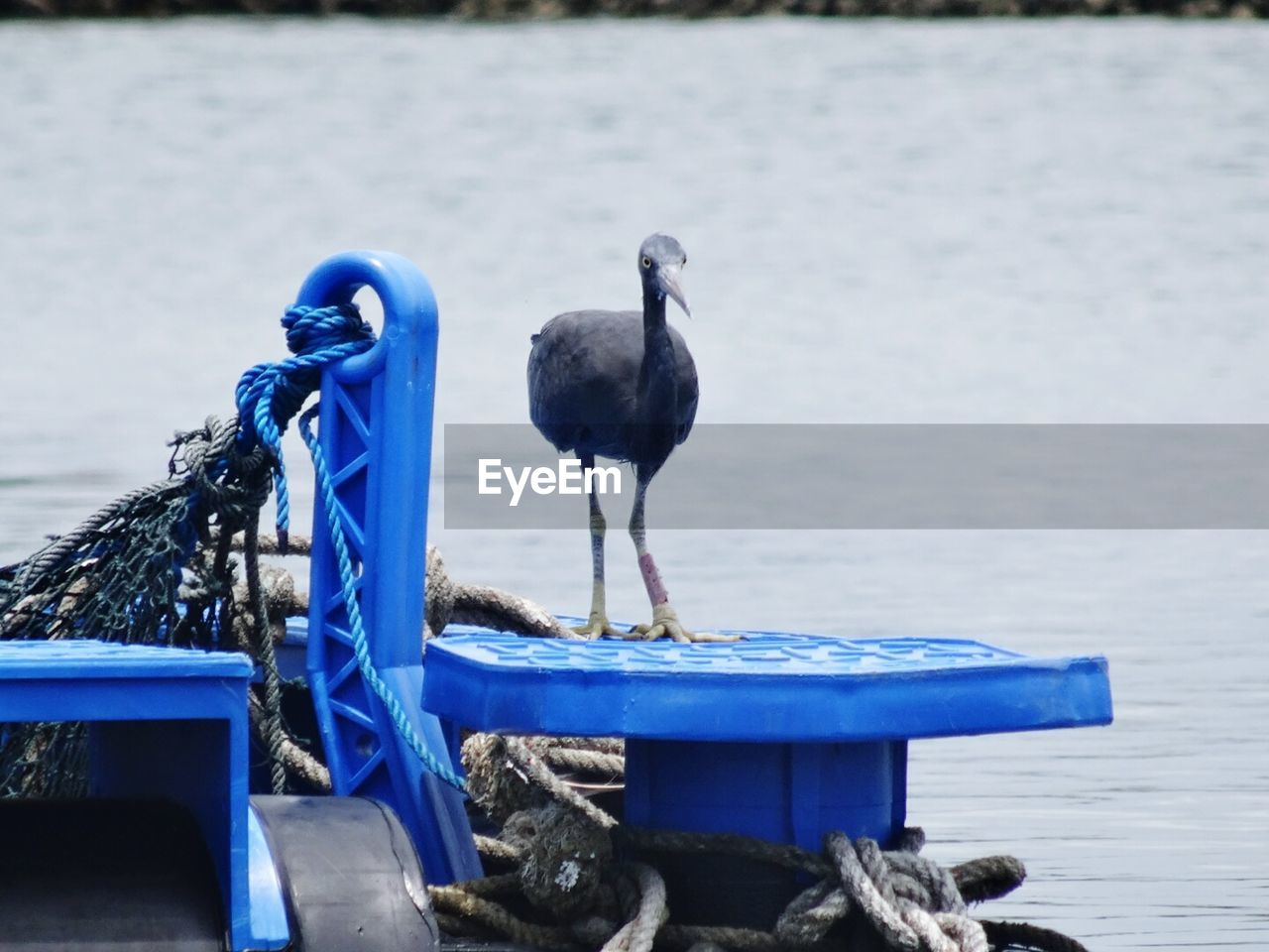 animal themes, water, animals in the wild, blue, no people, day, outdoors, transportation, sea, nature, bird, nautical vessel, moored, focus on foreground, one animal, perching, close-up