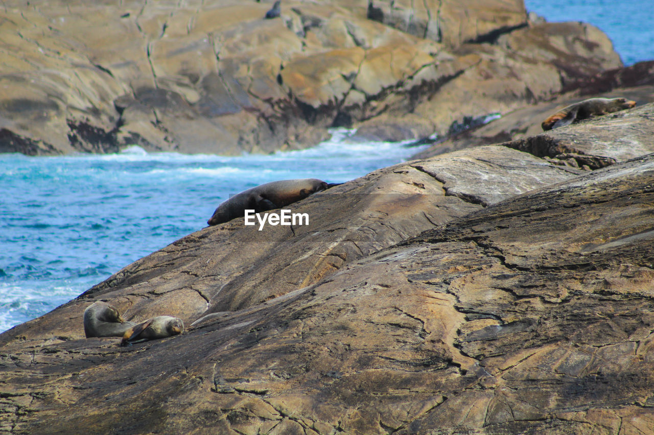 sea, water, rock, rock - object, beach, solid, land, nature, beauty in nature, animal wildlife, animals in the wild, scenics - nature, underwater, no people, day, rock formation, animal, animal themes, mammal, seal - animal, outdoors, sea lion, marine