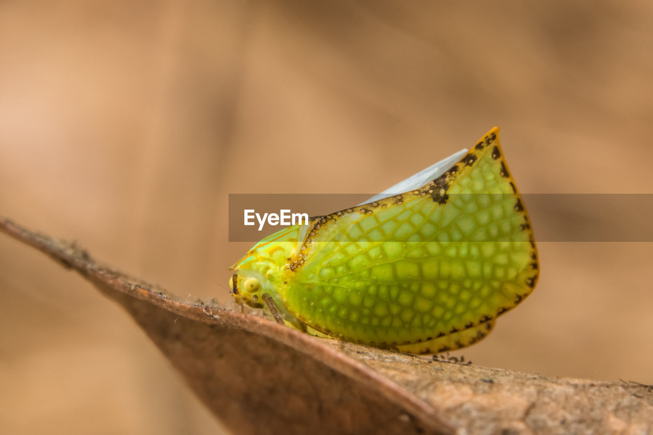 close-up, green color, selective focus, one animal, animal themes, animals in the wild, no people, animal, day, animal wildlife, nature, focus on foreground, snake, plant, outdoors, animal body part, sunlight, reptile, invertebrate, vertebrate, animal head