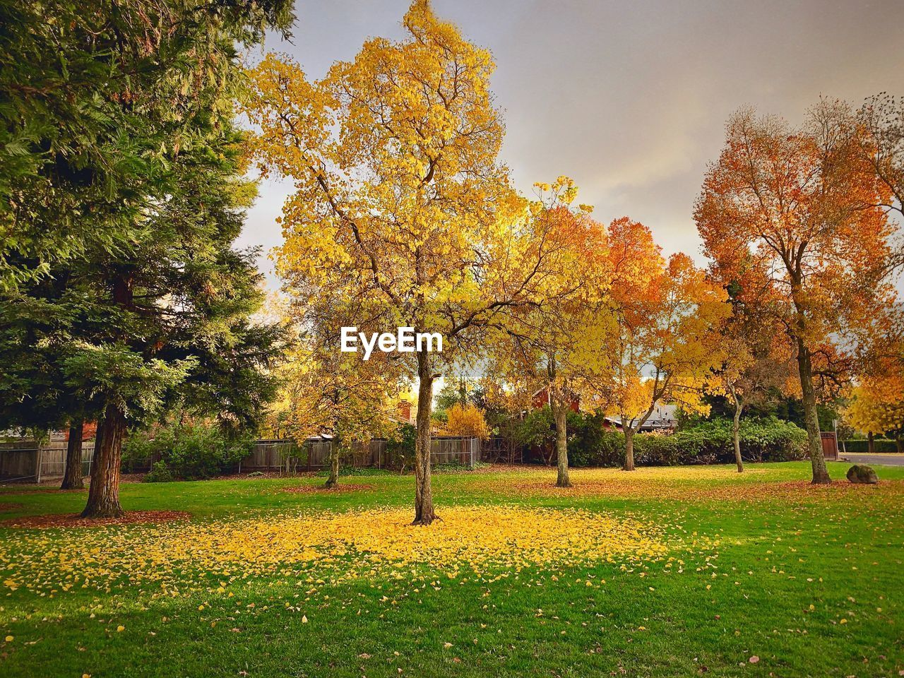 tree, plant, autumn, change, beauty in nature, grass, nature, orange color, sky, growth, land, field, scenics - nature, tranquility, tranquil scene, park, no people, day, green color, outdoors, fall
