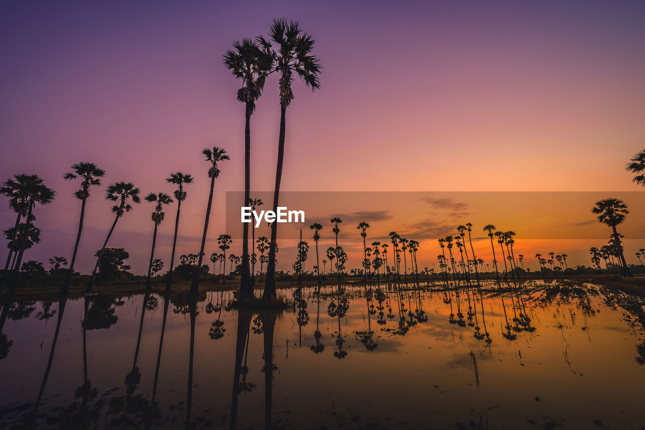 palm tree, tree, sunset, sky, water, plant, tropical climate, tranquility, beauty in nature, scenics - nature, tranquil scene, reflection, silhouette, no people, nature, orange color, waterfront, growth, coconut palm tree, outdoors, swimming pool, reflection lake, romantic sky