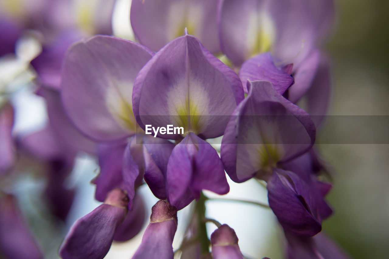 flower, purple, beauty in nature, nature, petal, fragility, growth, no people, close-up, plant, outdoors, day, flower head, freshness